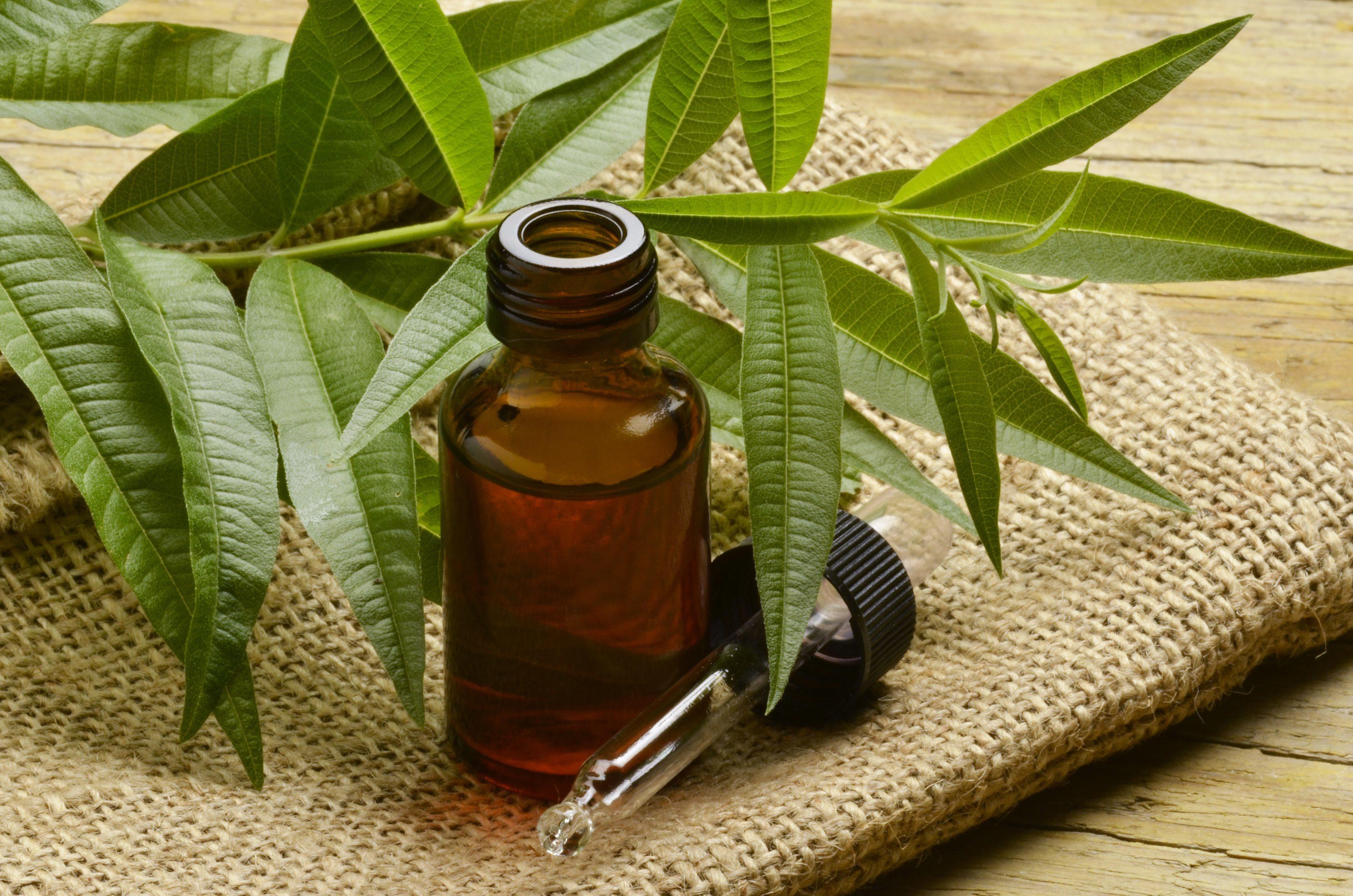 Свойства, показания и противопоказания масла чайного дерева для лица.