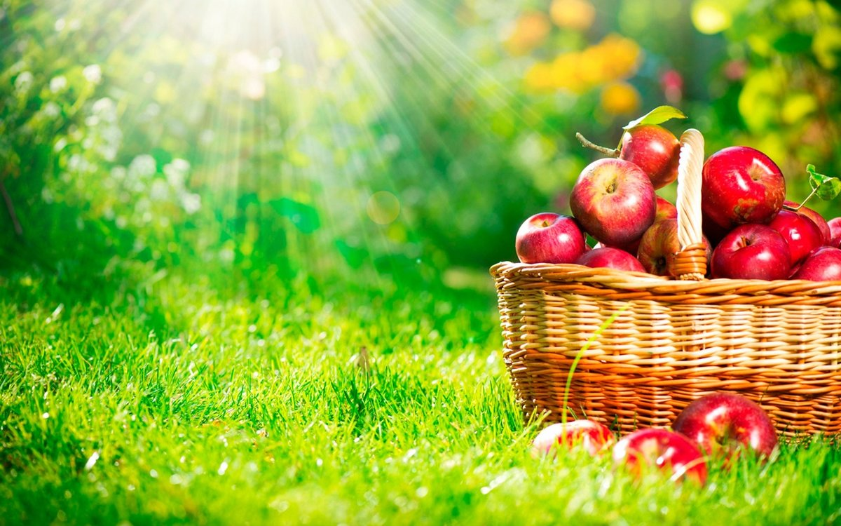 Яблоки для похудения: лучшие кулинарные рецепты!